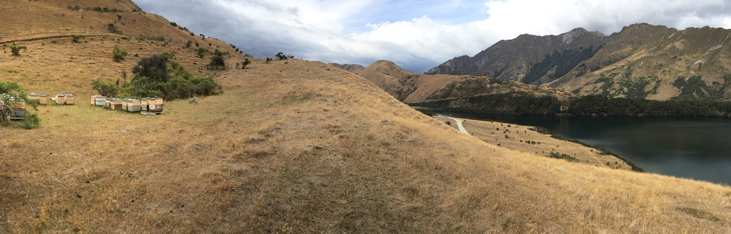 queenstown high country